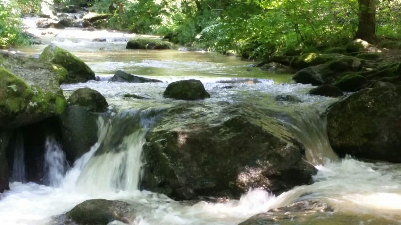 Wasser – Quelle allen Lebens